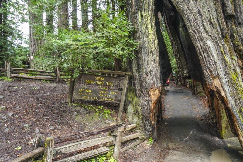 Het beroemde Heiligdom aandrijving-door boom bij Californische sequoia's Nationaal Park - ARCATA - CALIFORNIË - APRIL 17, 2017 stock afbeeldingen