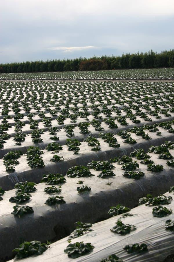 Het beschermen van het Land van het Landbouwbedrijf stock fotografie