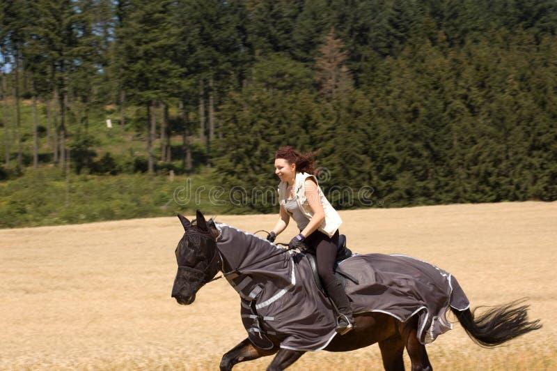 Het beschermen van het paard tegen insecten. stock fotografie