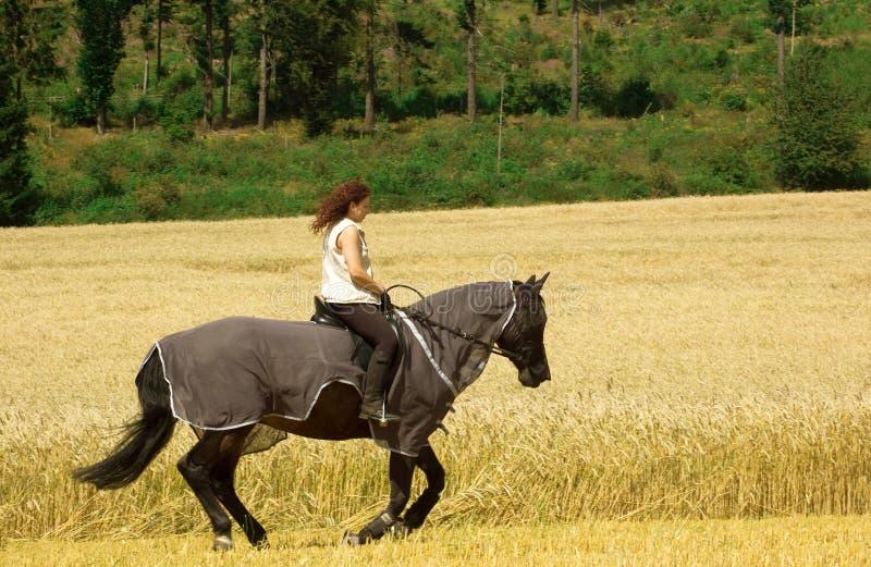 Het beschermen van paarden tegen insecten. royalty-vrije stock afbeeldingen