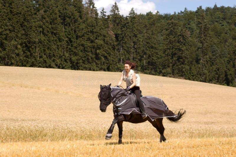 Het beschermen van paarden tegen insecten. stock foto's