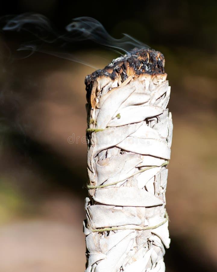 Het bevlekken ritueel die brandende dikke bladbundel van witte salie in bos gebruiken stock foto's