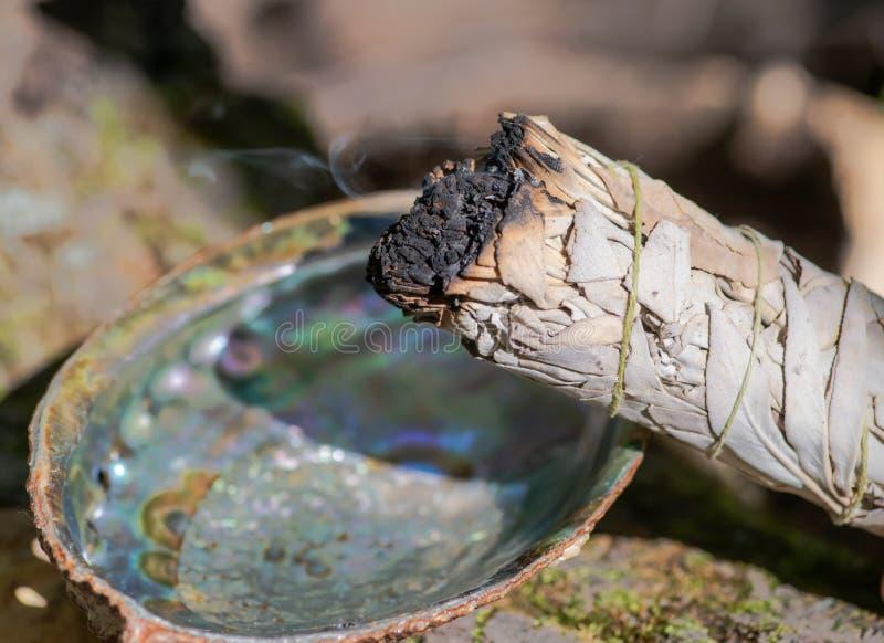 Het bevlekken ritueel die brandende dikke bladbundel van witte salie in heldere opgepoetste regenboogabalone shell in bos gebruik stock afbeeldingen