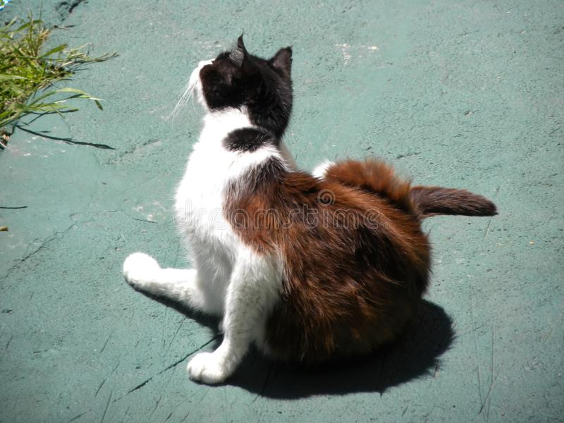 Het bevlekte kat krassen bij zonlicht stock foto
