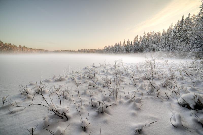 Het bevroren de wintermeer in hout onder sneeuw royalty-vrije stock fotografie