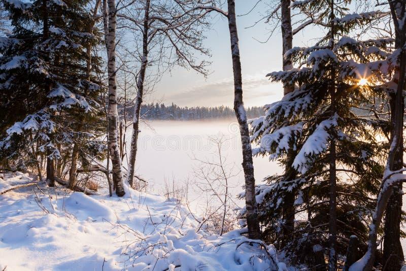 Het bevroren de wintermeer in hout onder sneeuw royalty-vrije stock foto's