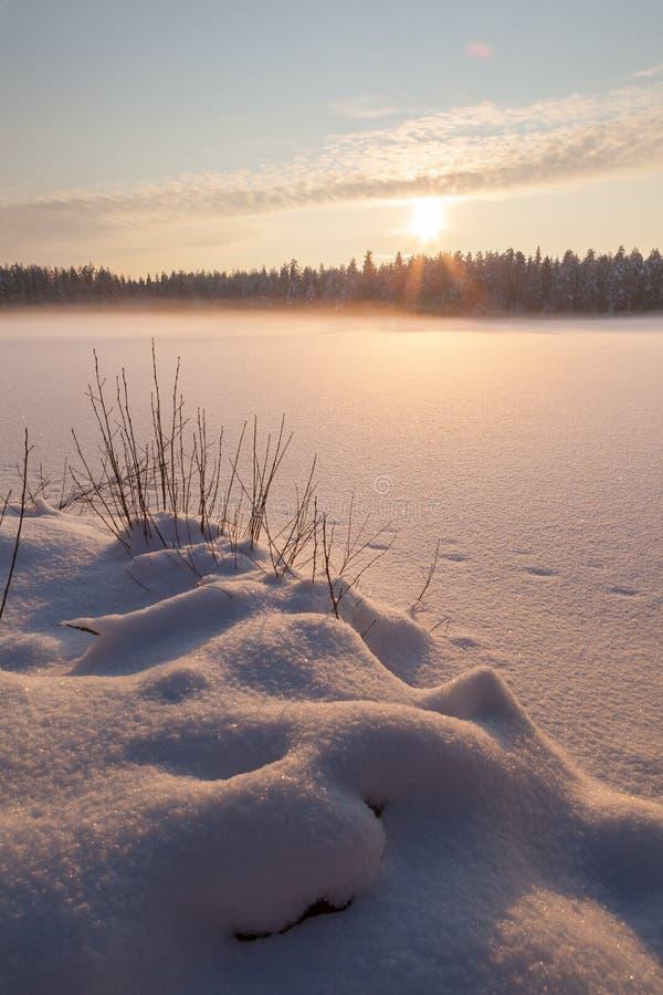 Het bevroren de wintermeer in hout onder sneeuw royalty-vrije stock afbeelding