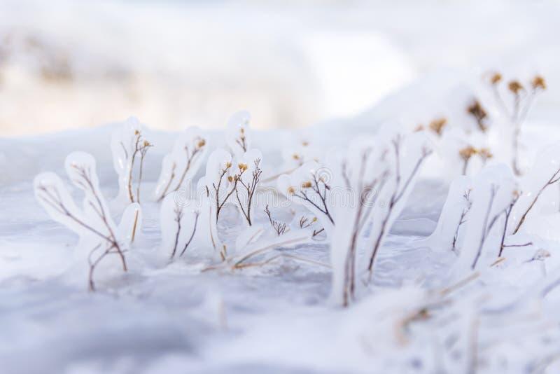 Het bevroren die gras vertakt zich de installatie van de close-upmening in ijs wordt behandeld stock foto's