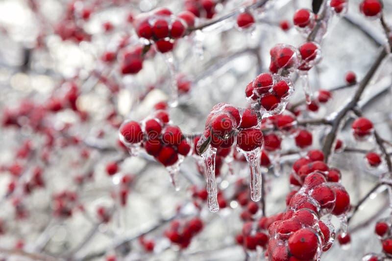 Het Bevroren Rode Fruit stock afbeelding