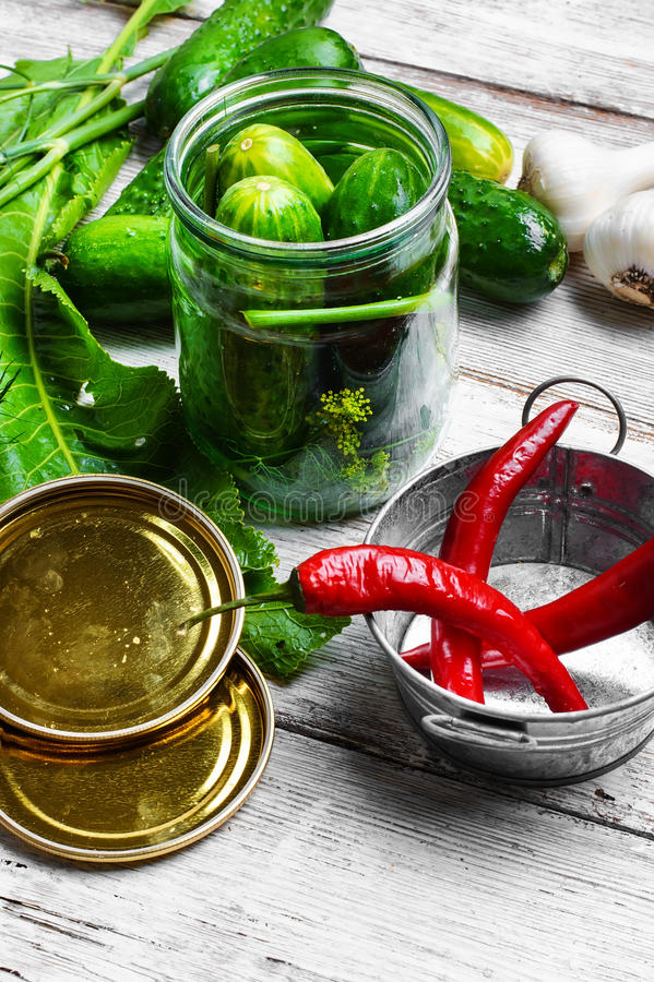 Het bewaren van verse komkommers stock foto