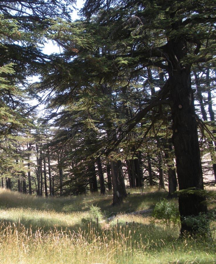 Het bezoeken van het Bos van Libanon ` s van de Ceders van God, Libanon stock foto's