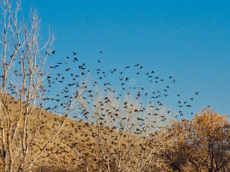 Het bijeenkomen van Vogels in November stock fotografie