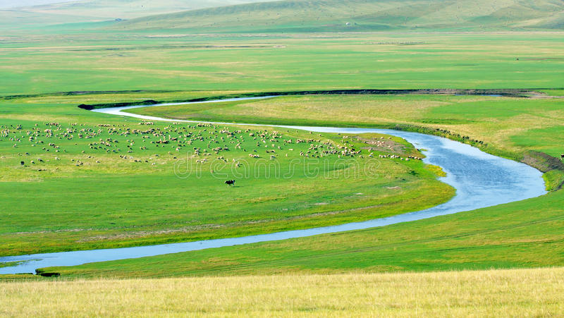 Het binnen weiland van Mongolië stock foto