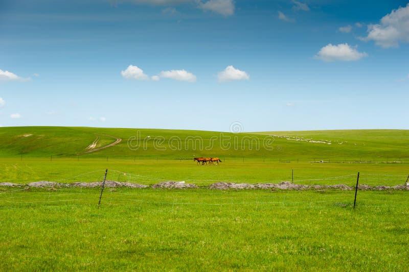 Het binnen weiland van Mongolië stock fotografie