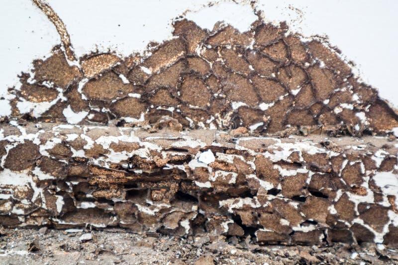 het binnenlandse hout was werd beschadigd door termiet omdat dit gebied niet s royalty-vrije stock afbeeldingen