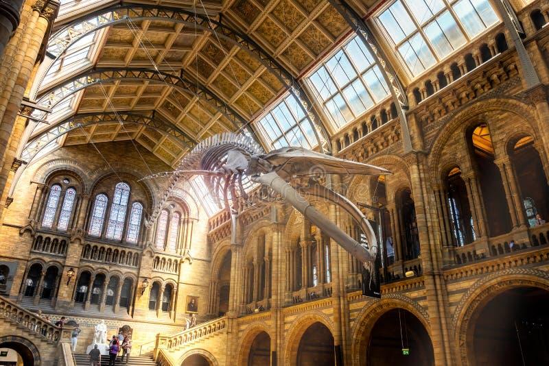 Het Biologiemuseum in Londen, het UK royalty-vrije stock foto