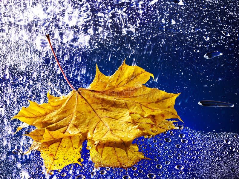 Het blad dat van de herfst op water met regen drijft. royalty-vrije stock foto's