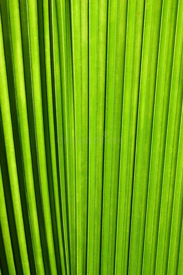 Het blad dichte omhooggaand van de palm stock fotografie