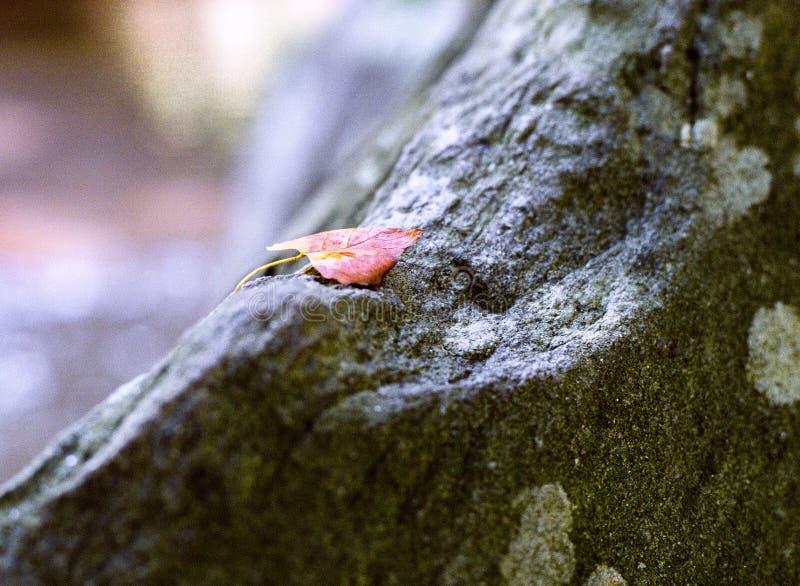 Het Blad en Lichen Autumn van de rotskreek royalty-vrije stock foto's