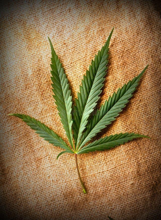 Het blad van de cannabis royalty-vrije stock afbeelding
