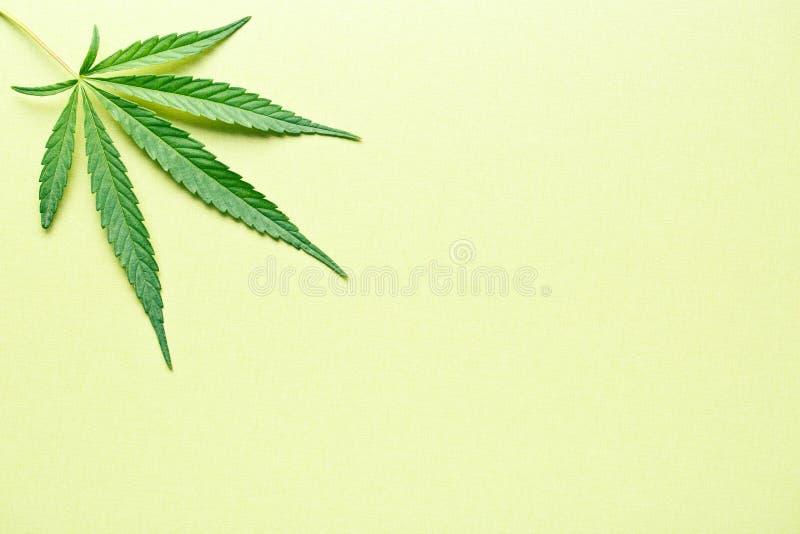 Het blad van de cannabis stock fotografie
