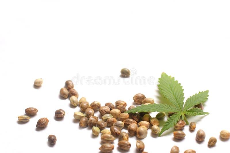 Het Blad van de cannabis met Zaden royalty-vrije stock fotografie