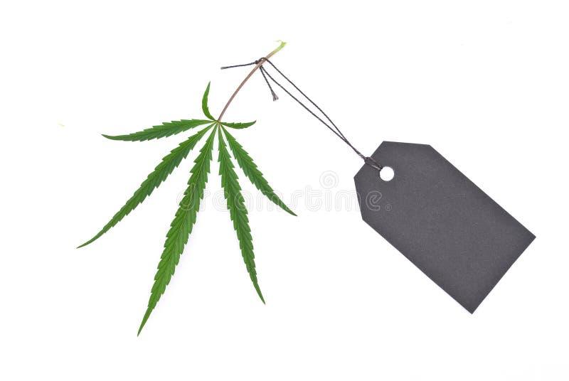 Het blad van de cannabis met zwarte markering royalty-vrije stock foto