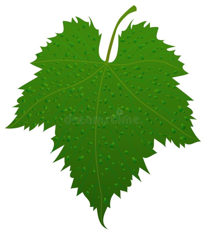 Het blad van de druif