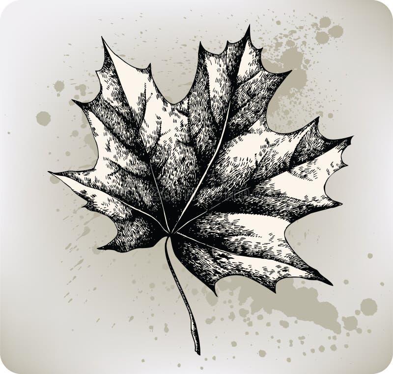Het blad van de esdoorn, hand-trekt. Vector illustratie. vector illustratie