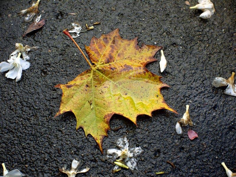 Het blad van de herfst. stock foto