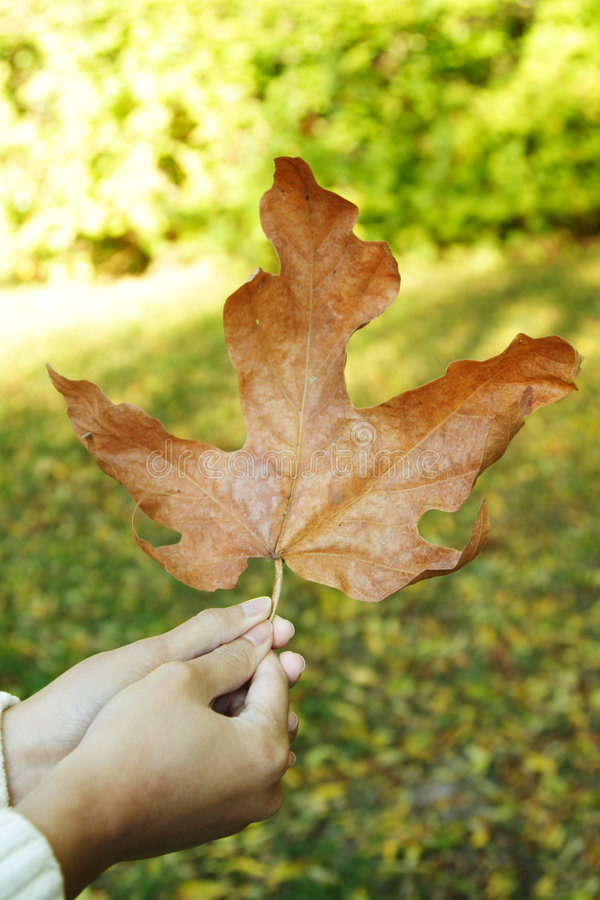 Het blad van de herfst stock foto