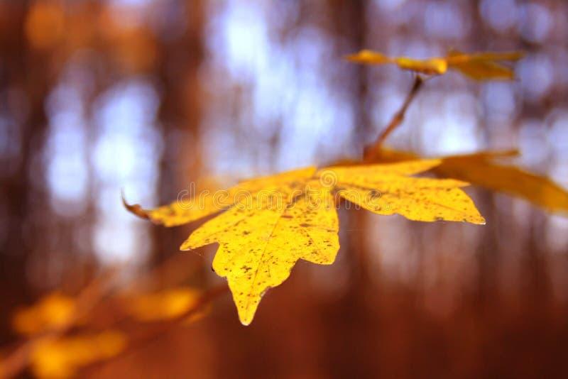 Het blad van de herfst stock fotografie