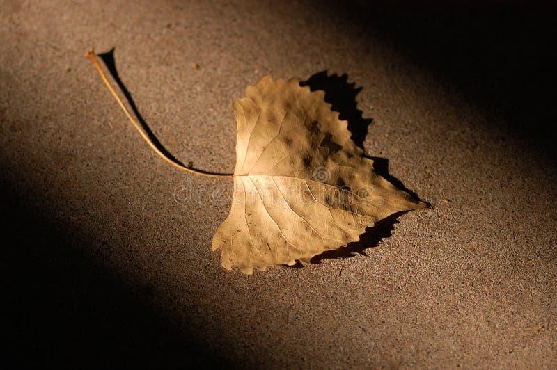 Download Het Blad van de herfst stock foto. Afbeelding bestaande uit blad - 33180