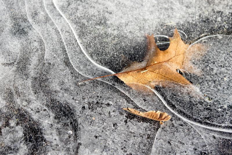 Het blad van de herfst dat in het ijs wordt bevroren royalty-vrije stock foto