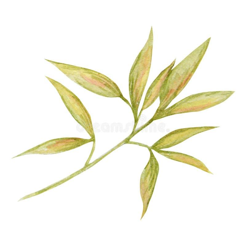 Het blad van de herfst dat op een witte achtergrond wordt ge?soleerd Het bladhand getrokken illustratie van de waterverfherfst stock illustratie