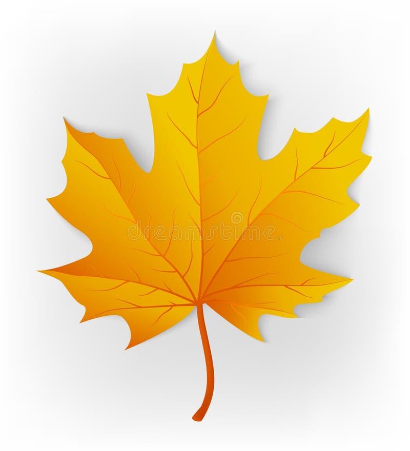 Het blad van de herfst De grootte van het beeld XXXL Blad op een witte achtergrond wordt geïsoleerd die De esdoornblad van de her stock illustratie