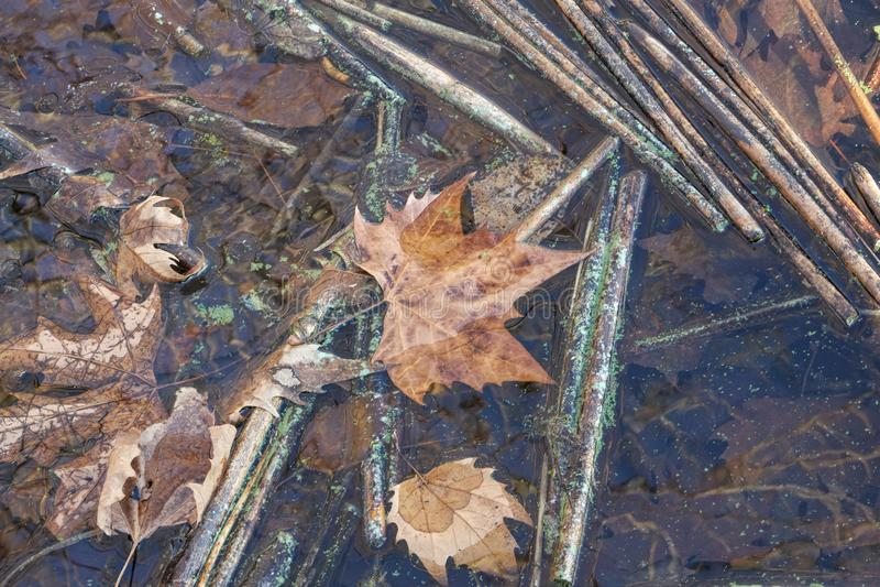 Het blad van de herfst op water royalty-vrije stock foto's