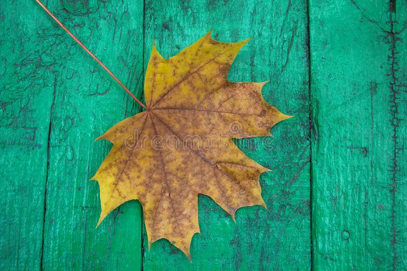 Het blad van de herfst over houten achtergrond royalty-vrije stock foto