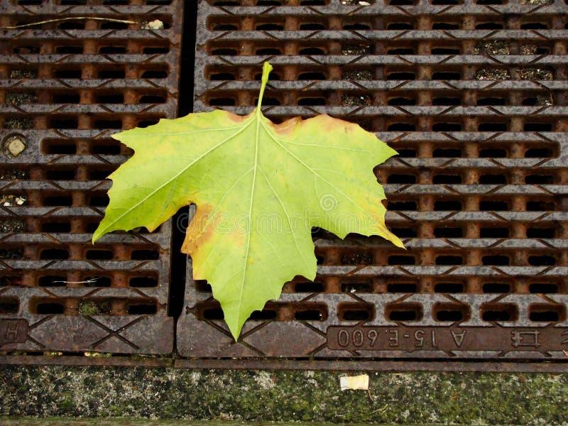 Het blad van de de herfstesdoorn op de metaalrooster in de straat royalty-vrije stock afbeeldingen