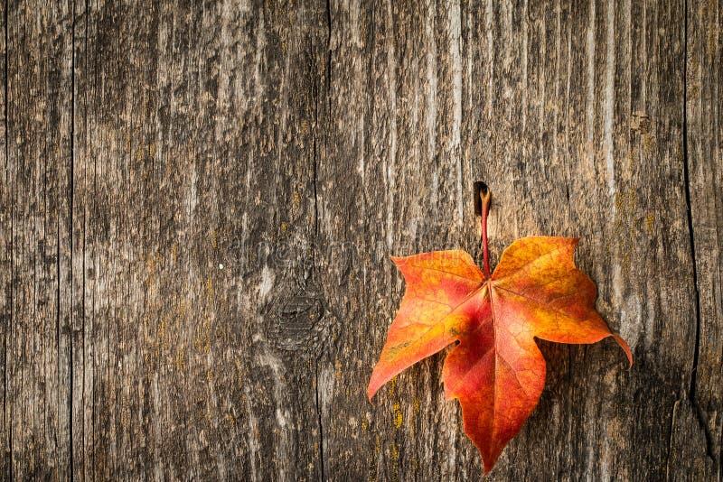 Het blad van de de herfstesdoorn over oude houten achtergrond royalty-vrije stock fotografie