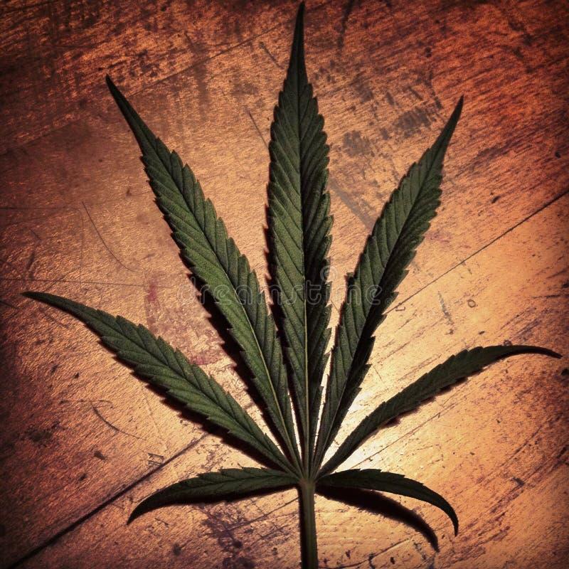 Download Het Blad van de marihuana stock afbeelding. Afbeelding bestaande uit gebladerte - 29513813
