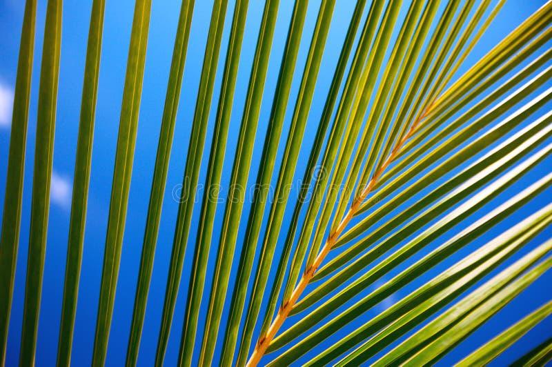 Het blad van de palm stock fotografie