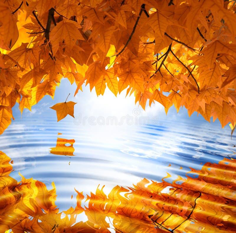 Het bladachtergrond van de herfst stock fotografie