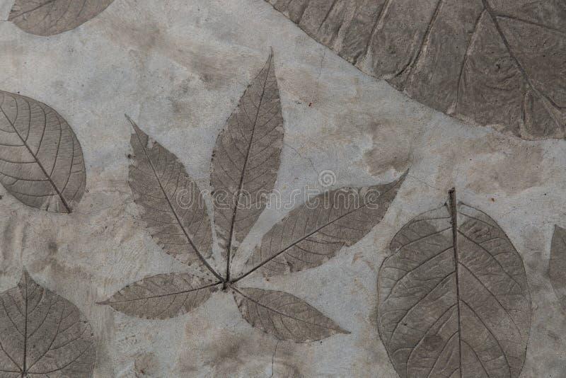 Het bladdetail werd gestempeld op de concrete oppervlaktevloer stock afbeelding