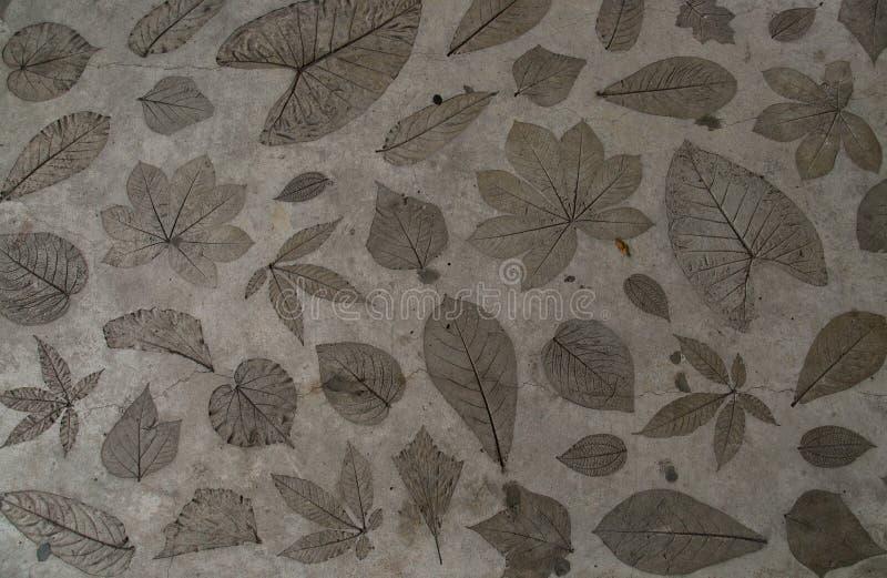 Het bladdetail werd gestempeld op de concrete oppervlaktevloer royalty-vrije stock afbeeldingen