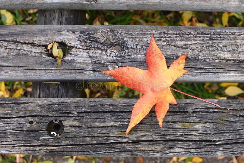 Het bladexemplaar ruimtesolit van Autumn Fall Bench Maple van het eenzaamheidsconcept royalty-vrije stock foto