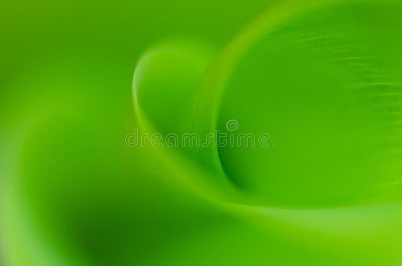 Het bladflora van de groene installatie macroaard stock afbeelding