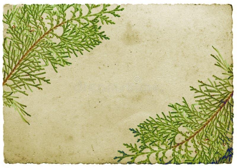 Het bladgrens van Kerstmis