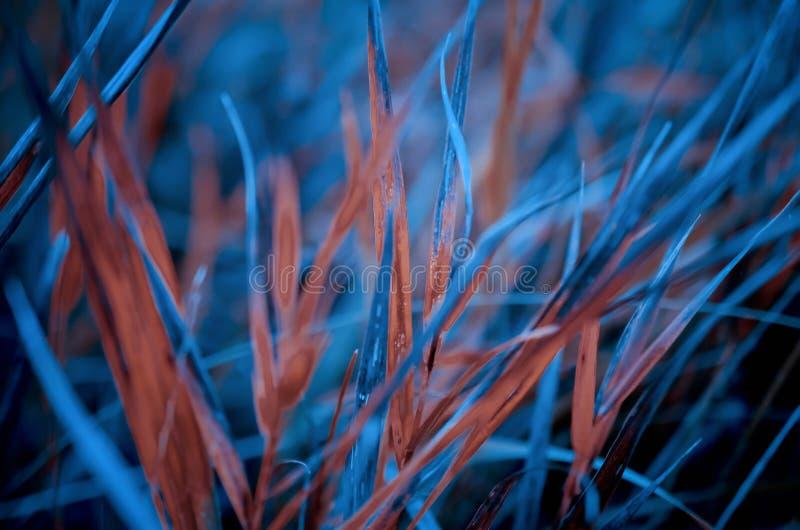 Het blauw en de sinaasappel doorbladeren op weide in close-upmening royalty-vrije stock fotografie