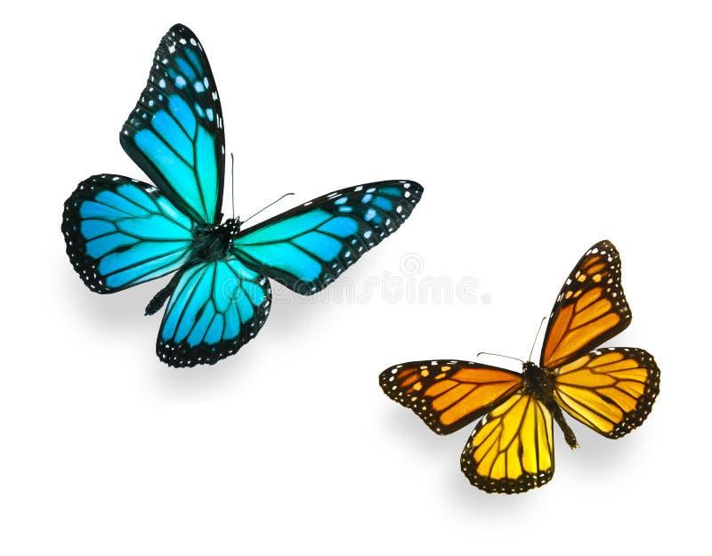 Het Blauw en de Sinaasappel van de Vlinder van de monarch stock foto's